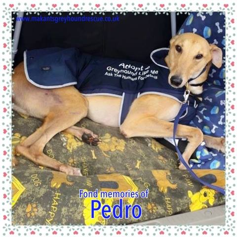 Pedro memoriam photo 24.2.19