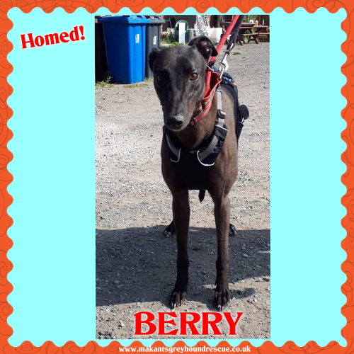 Berry homed fb 10.7.18