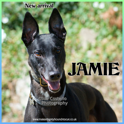 Jamie new arrival for fb 12.7.18