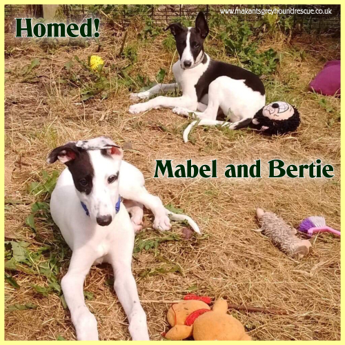 Mabel and Bertie was Archie Slasher homed 23.7.18