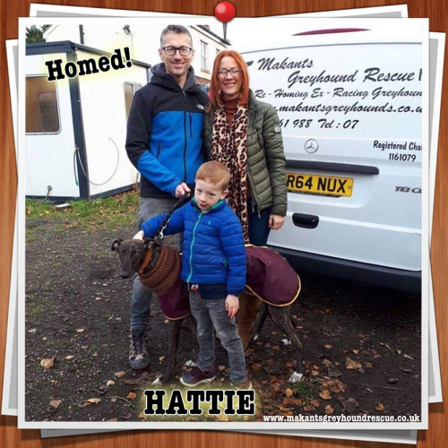 Hattie homed 25.11.18 for facebook