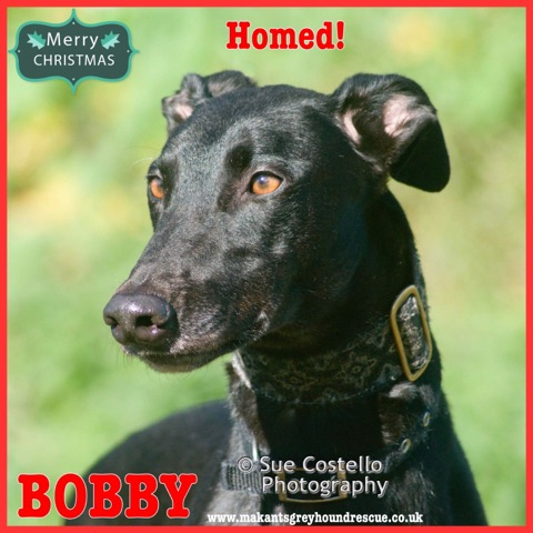 Bobby homed 15.12.18 for fb