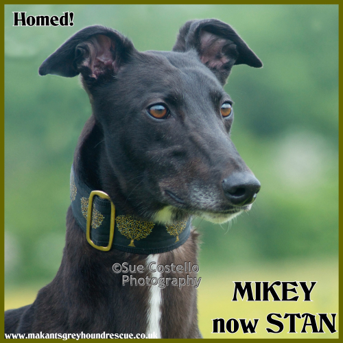 Mikey now Stan homed 11.8.18