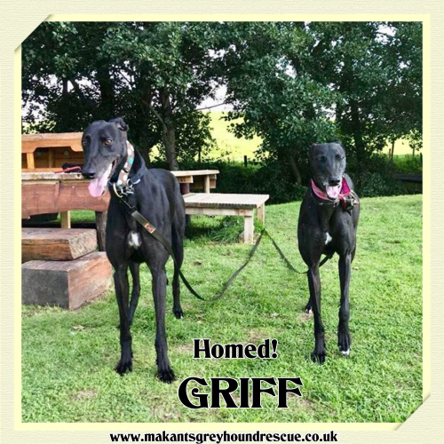 Griff homed. fb on 11.9.18 with Maisie