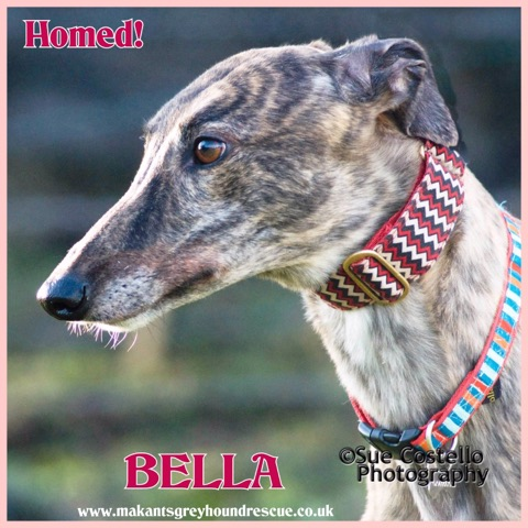 Bella homed 20.1.19