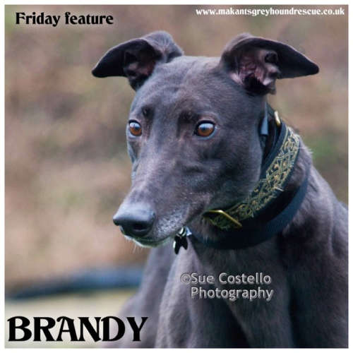 Brandy friday feature