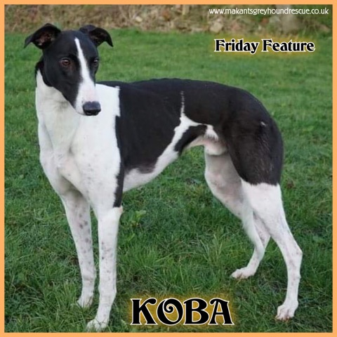 KOBA friday feature 23.3.19