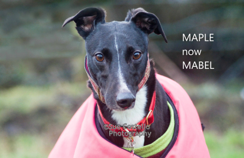 Maple now Mabel homed 174.19