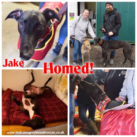 Jake homed collage 11.3.1i9