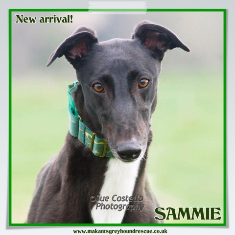 Sammie for facebook new arrival